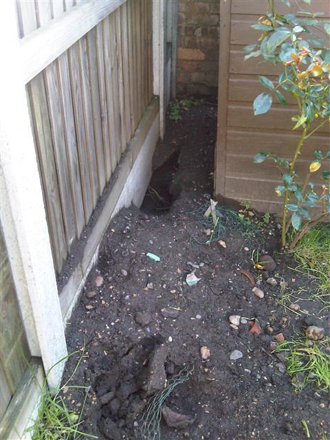 8. Fox Earth dug under base